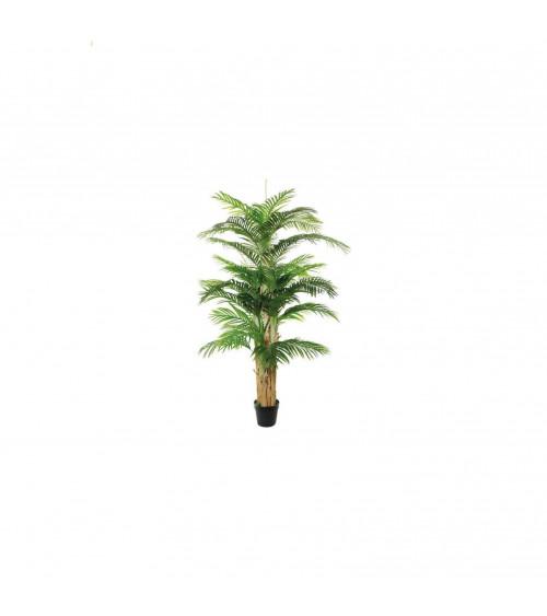 Palma di Areca