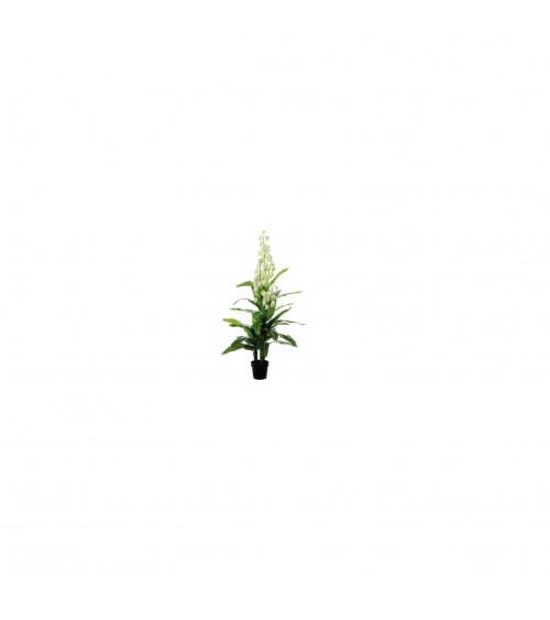 Yucca con fiore